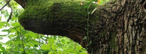 La empresa de gestión ambiental Bosques Sostenibles desarrolla un sensor para saber en tiempo real cuánto CO2 absorben los árboles