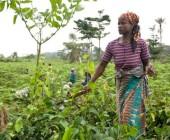 La FAO publica una guía sobre capacitación de género y cambio climático
