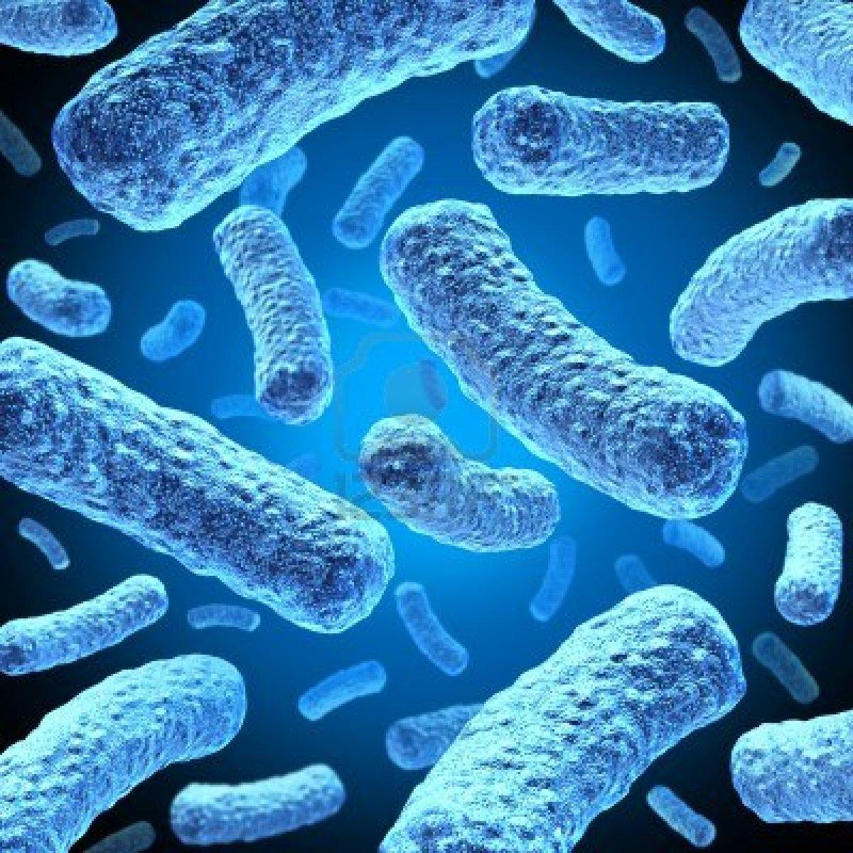 Patentan bacterias que producen biodiesel de forma más eficiente y limpia