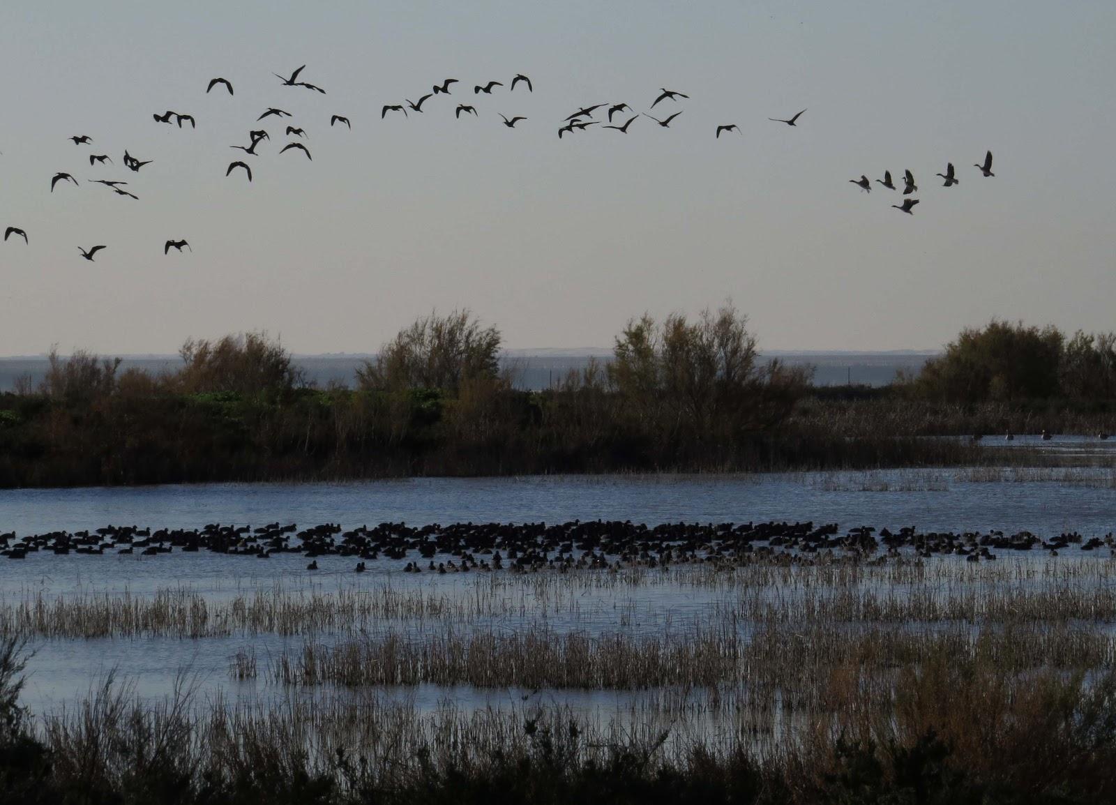 Las marismas de Doñana actúan como sumideros de carbono